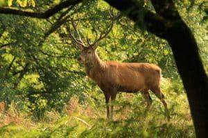 Week-end Morbihan parmi les cerfs Terres de Bretagne