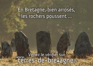 En Bretagne, bien arrosés, les rochers poussent