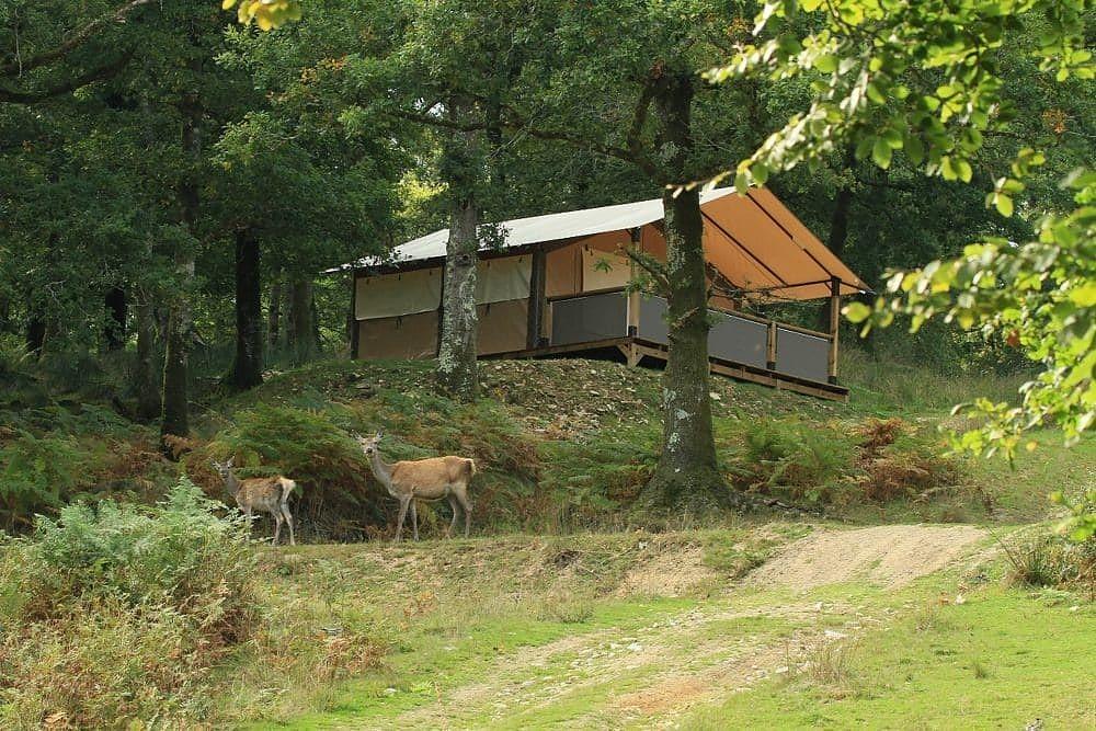 Week-end Priziac parmi les cerfs Terres de Bretagne