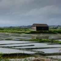Balade sur les rives de la Vilaine, Bretagne Sud – bon cadeau